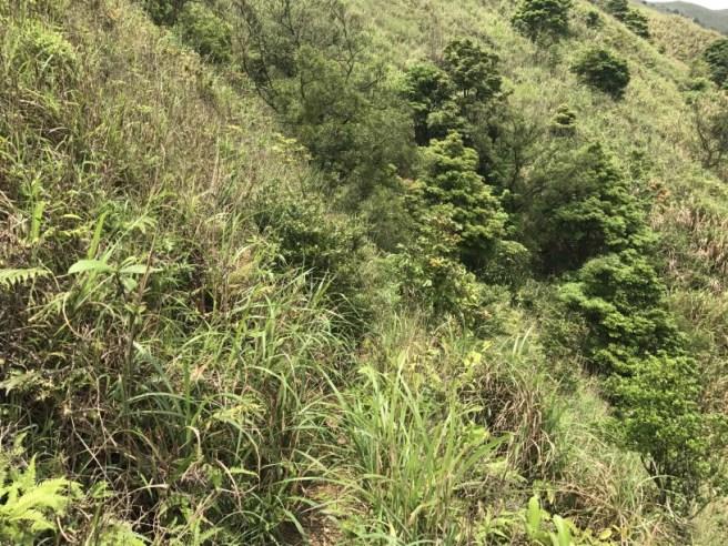 Hiking 29.4.17 Tai Mo Shan (36)