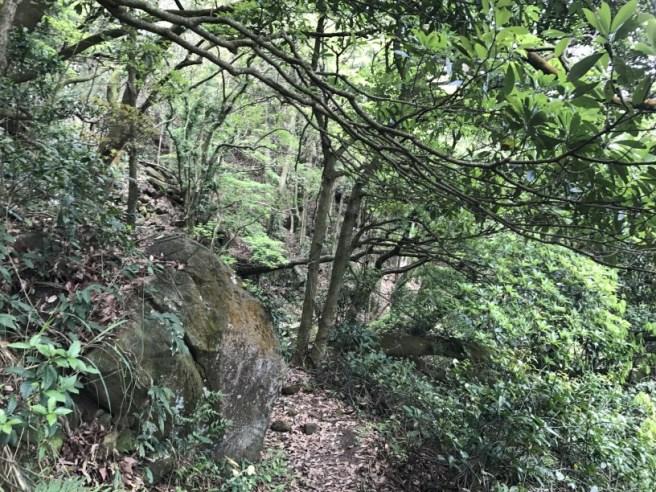 Hiking 29.4.17 Tai Mo Shan (37)