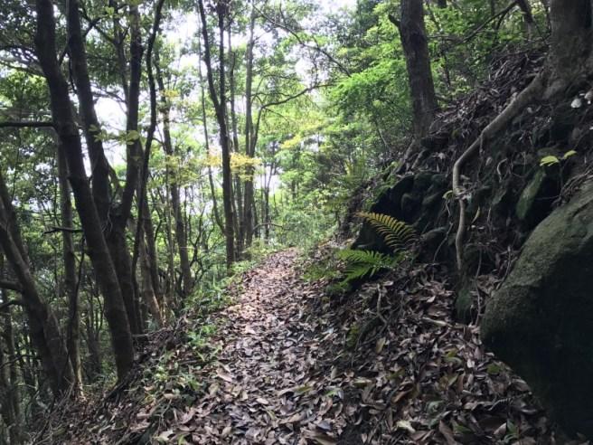 Hiking 29.4.17 Tai Mo Shan (40)