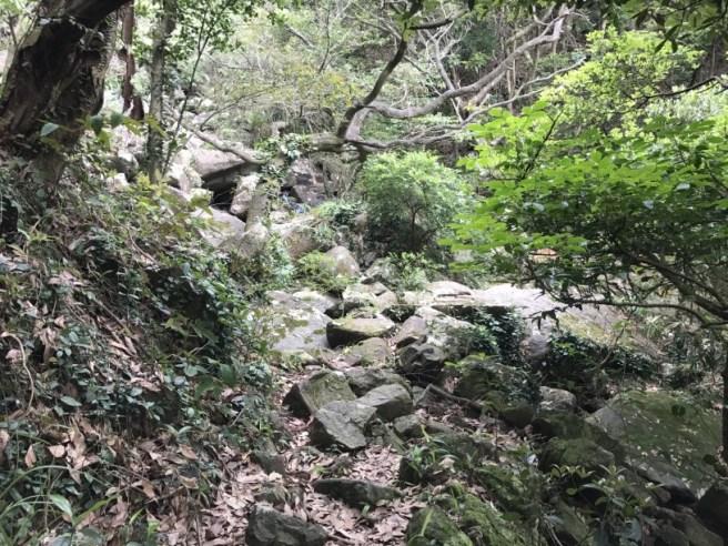 Hiking 29.4.17 Tai Mo Shan (42)