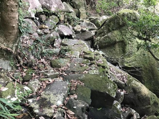 Hiking 29.4.17 Tai Mo Shan (43)