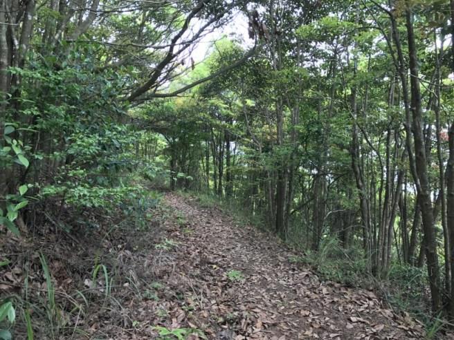 Hiking 29.4.17 Tai Mo Shan (44)
