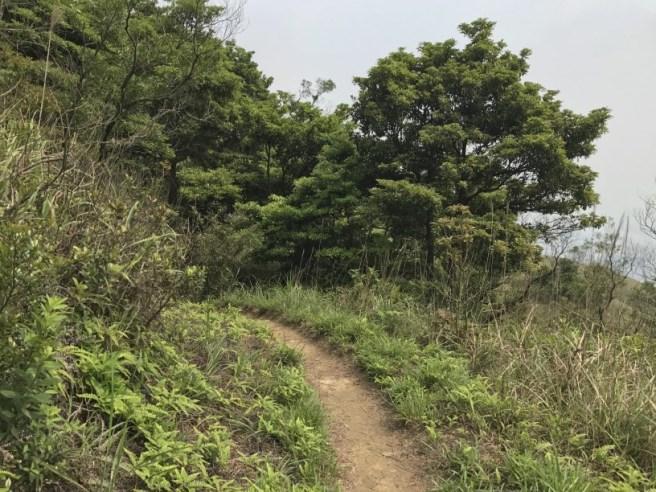 Hiking 29.4.17 Tai Mo Shan (46)