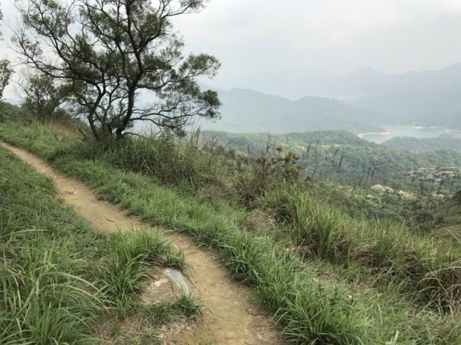 Hiking 29.4.17 Tai Mo Shan (49)