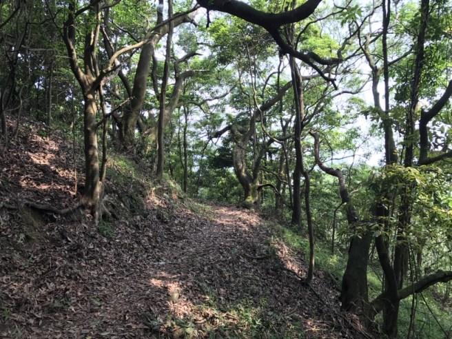 Hiking 29.4.17 Tai Mo Shan (50)