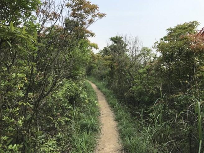 Hiking 29.4.17 Tai Mo Shan (53)