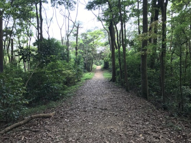 Hiking 29.4.17 Tai Mo Shan (58)