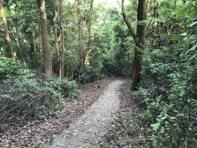 Hiking 29.4.17 Tai Mo Shan (59)