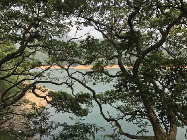 Hiking 29.4.17 Tai Mo Shan (63)