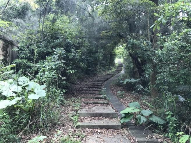 Hiking 29.4.17 Tai Mo Shan (7)
