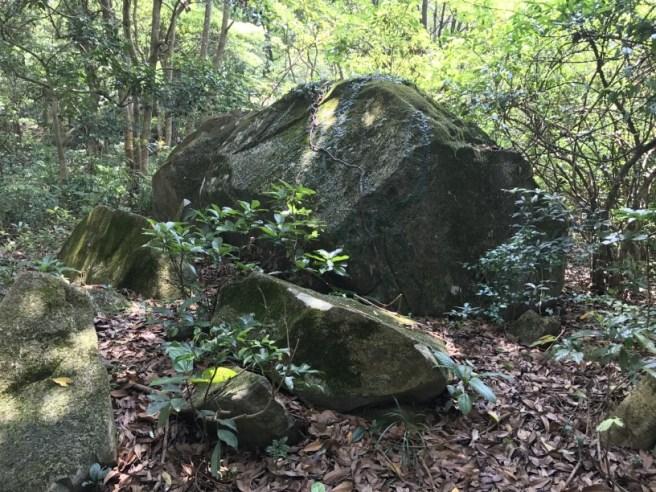 Hiking 29.4.17 Tai Mo Shan (9)