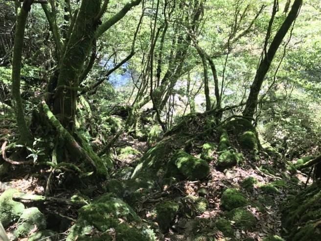 Hiking 10.5.2017 Yakushima (10)