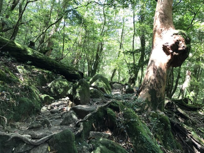 Hiking 10.5.2017 Yakushima (13)