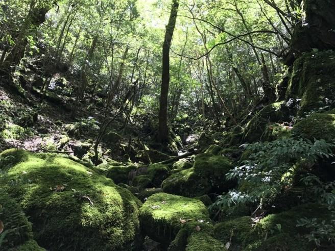 Hiking 10.5.2017 Yakushima (15)