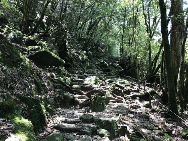 Hiking 10.5.2017 Yakushima (16)