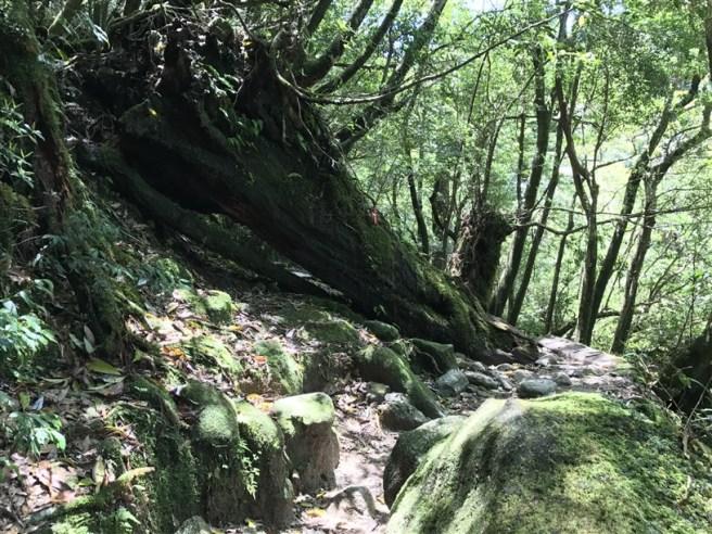 Hiking 10.5.2017 Yakushima (18)
