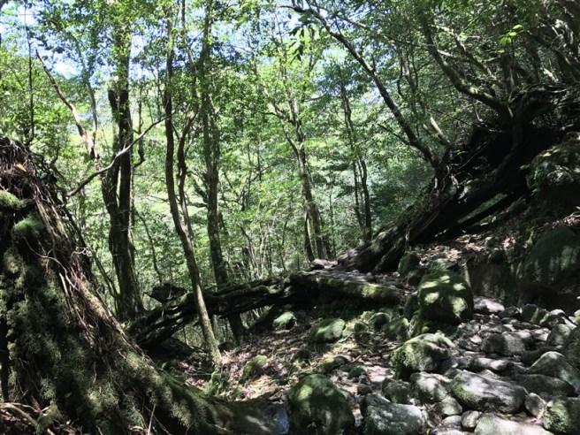 Hiking 10.5.2017 Yakushima (19)
