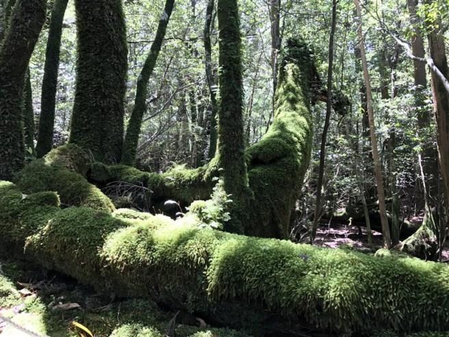 Hiking 10.5.2017 Yakushima (24)