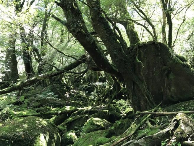 Hiking 10.5.2017 Yakushima (28)