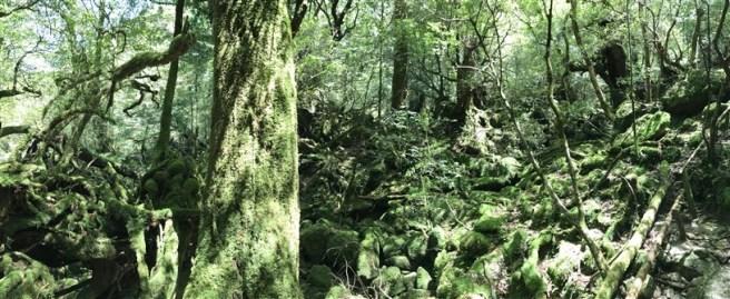 Hiking 10.5.2017 Yakushima (30)