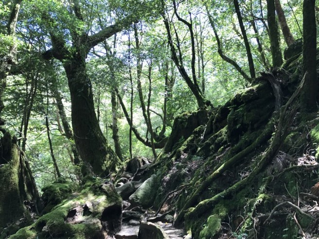 Hiking 10.5.2017 Yakushima (32)