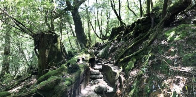 Hiking 10.5.2017 Yakushima (33)