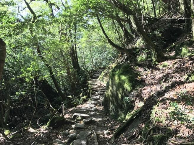 Hiking 10.5.2017 Yakushima (46)