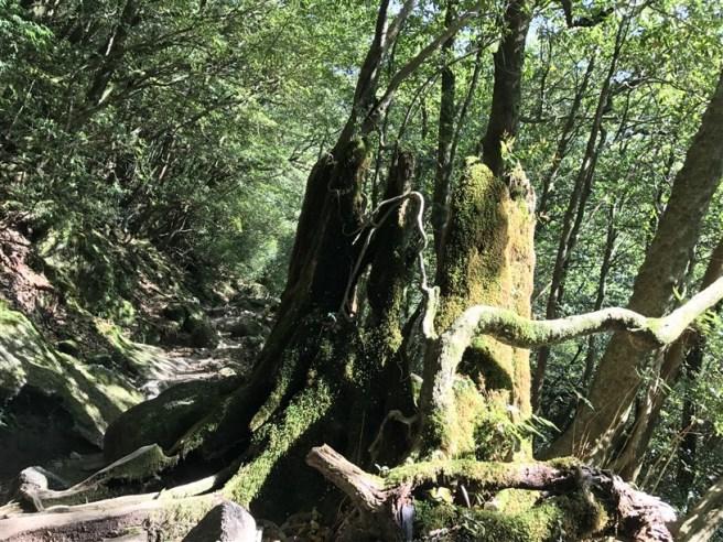 Hiking 10.5.2017 Yakushima (47)