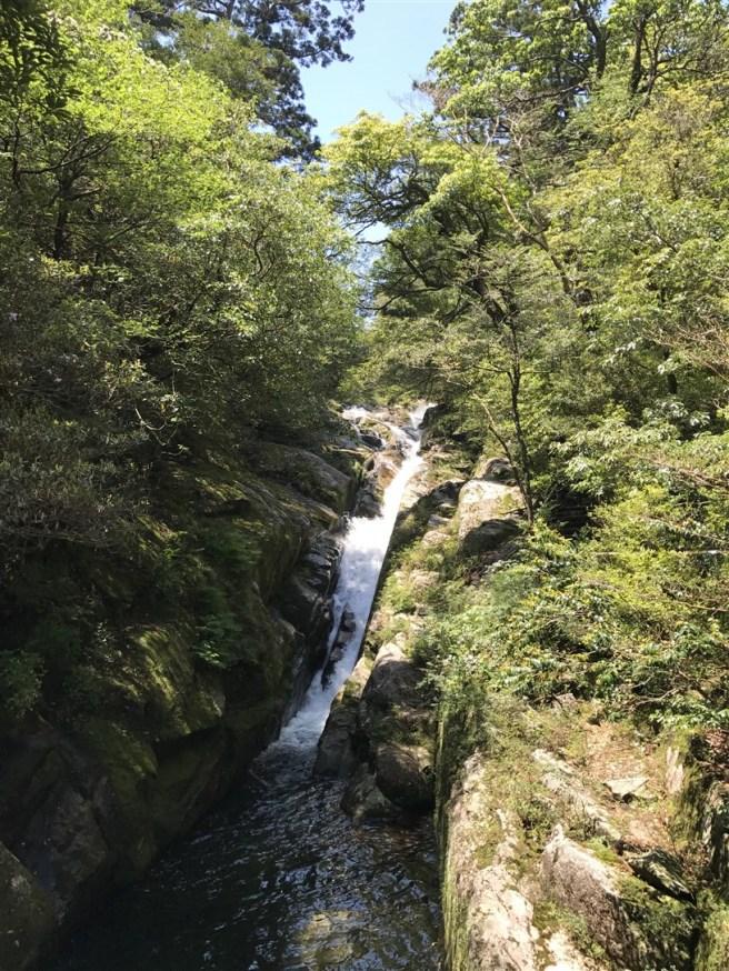 Hiking 10.5.2017 Yakushima (5)