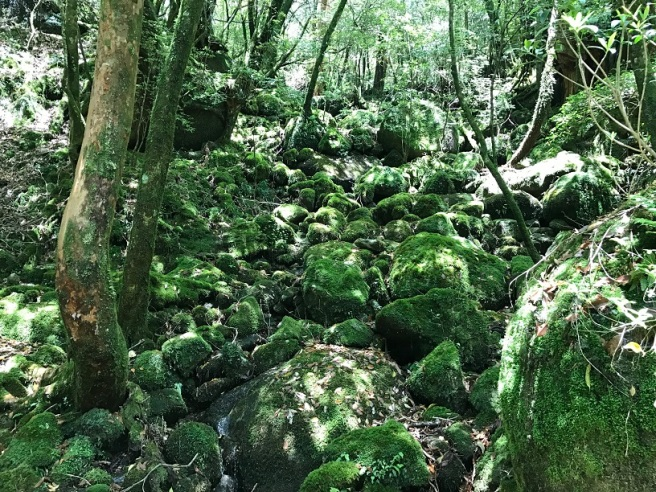 Hiking 10.5.2017 Yakushima (50).JPG