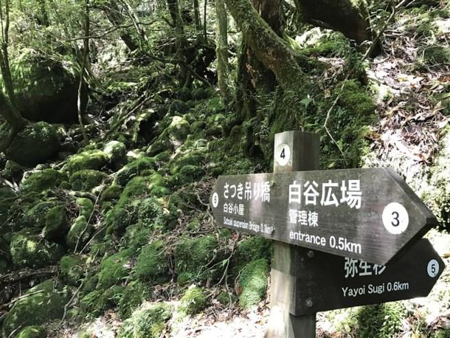 Hiking 10.5.2017 Yakushima (7)