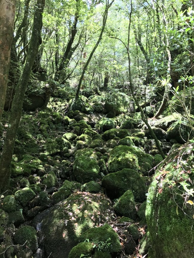 Hiking 10.5.2017 Yakushima (9)