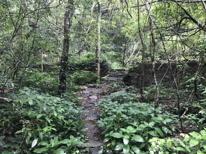 Hiking 21.5.17 Tai No Ancient Trail (10)
