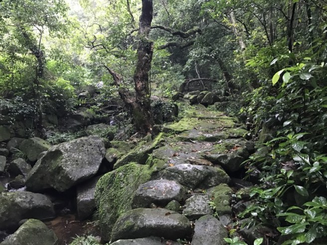 Hiking 21.5.17 Tai No Ancient Trail (12)