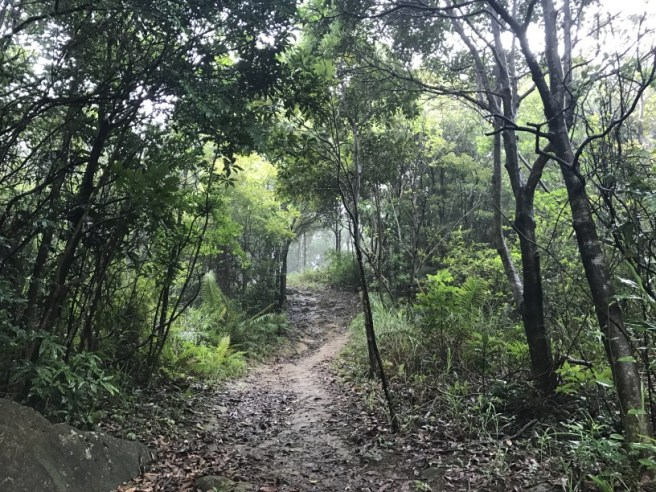 Hiking 21.5.17 Tai No Ancient Trail (25)