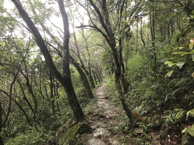 Hiking 21.5.17 Tai No Ancient Trail (26)