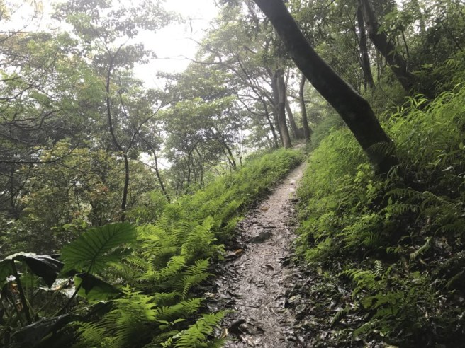 Hiking 21.5.17 Tai No Ancient Trail (27)