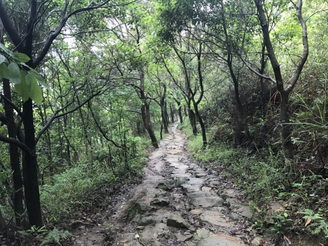 Hiking 21.5.17 Tai No Ancient Trail (28)