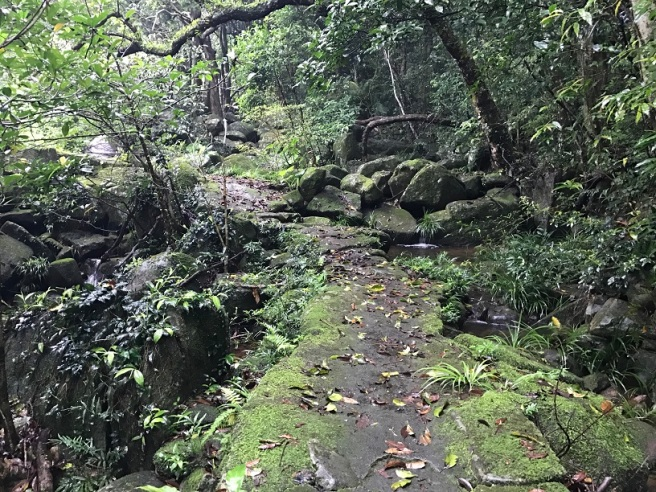 Hiking 21.5.17 Tai No Ancient Trail (35)