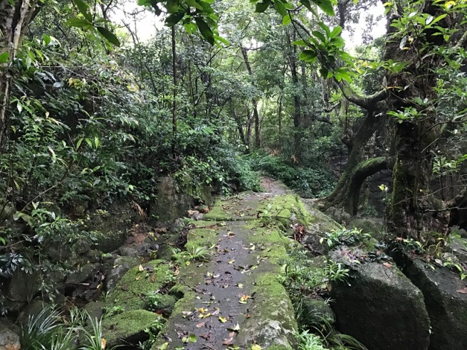 Hiking 21.5.17 Tai No Ancient Trail (37)