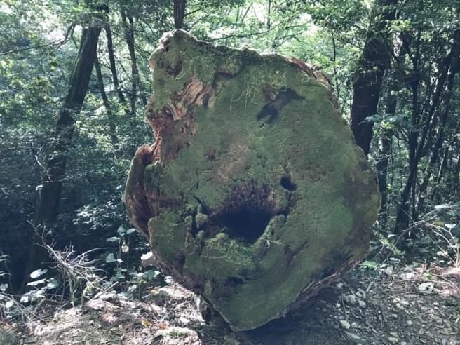 Hiking 8.5.17 - Jomon Sugi yakushima (12)