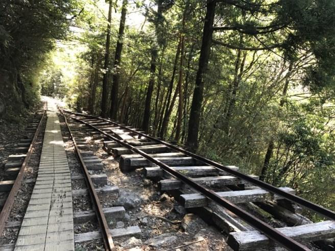 Hiking 8.5.17 - Jomon Sugi yakushima (15)