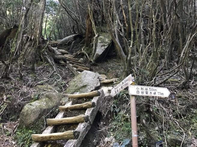 Hiking 8.5.17 - Jomon Sugi yakushima (17)