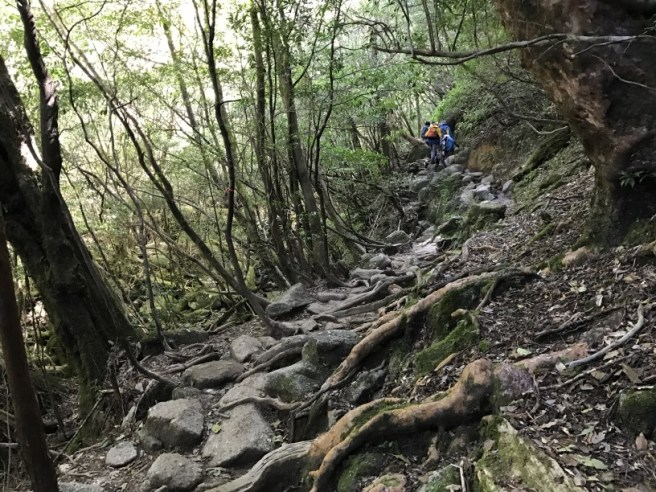 Hiking 8.5.17 - Jomon Sugi yakushima (19)
