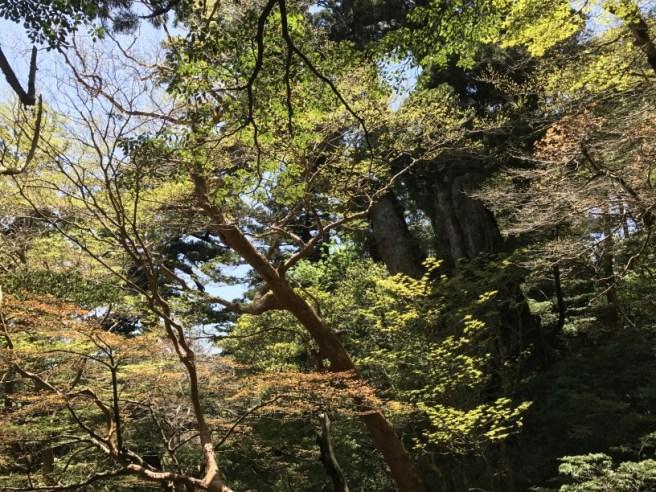 Hiking 8.5.17 - Jomon Sugi yakushima (32)