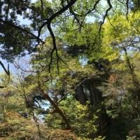 日本屋久島 ~ 繩文杉