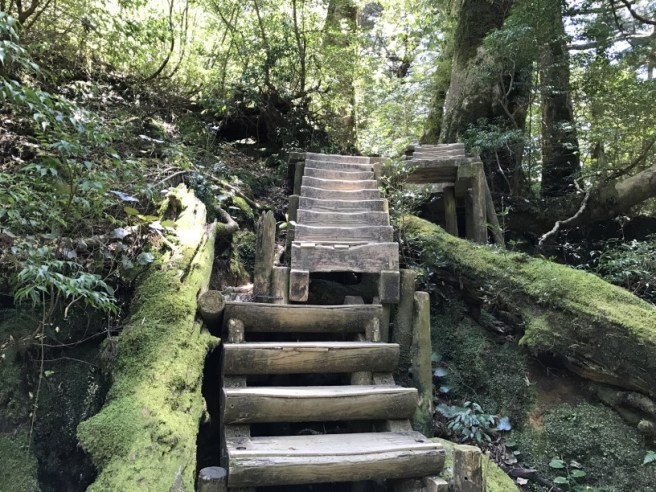 Hiking 8.5.17 - Jomon Sugi yakushima (37)
