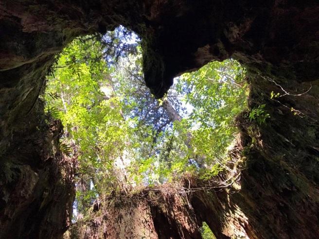 Hiking 8.5.17 - Jomon Sugi yakushima (42)