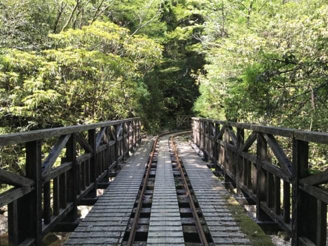 Hiking 8.5.17 - Jomon Sugi yakushima (48)