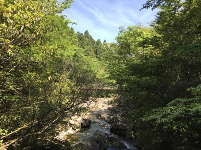 Hiking 8.5.17 - Jomon Sugi yakushima (49)